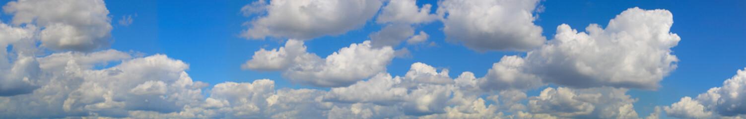 big panorama. landscape blue sky and palms