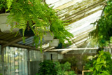View of Greenhouse Plants at Nursery poster