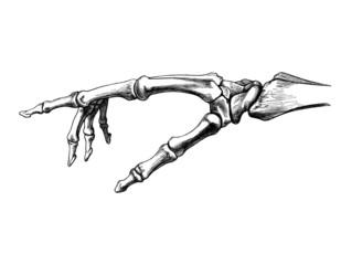 knochen_hand