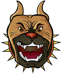 Pit bull Terrier head
