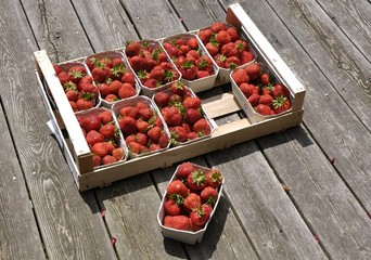 Stiege Erdbeeren - Crate Strawberries