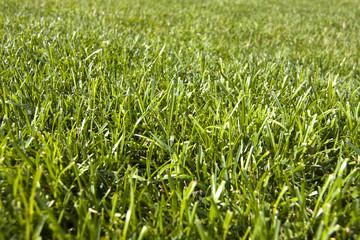 detalle de la hierba