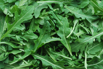 Feuilles de Roquette - Rocket Leaves