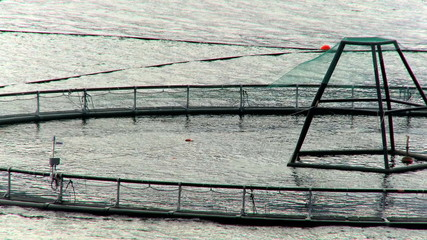 Commercial Salmon Farm
