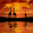 Giraffes on a beautiful sunset background