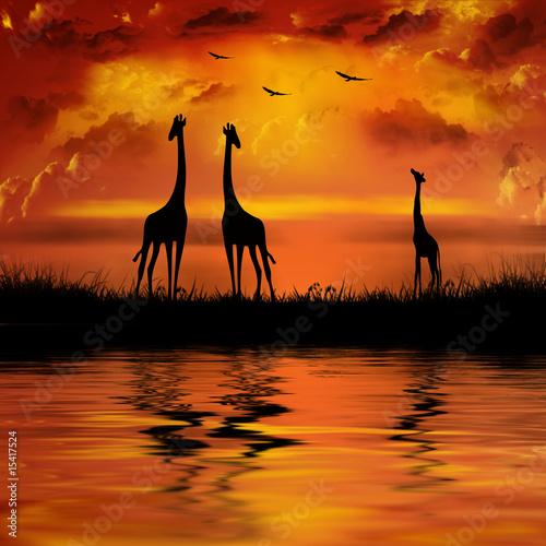 Giraffes on a beautiful sunset background
