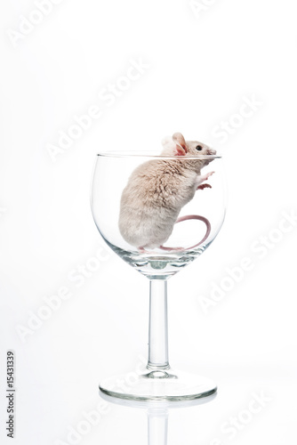 white mouse in glass