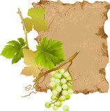 Green Grapes on the Old Scroll Background