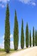 Zypressen Allee, Wanderweg, Toskana, Italien