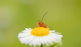 Insect pollenizing flowers poster