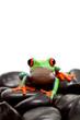 frog rocks isolated on white