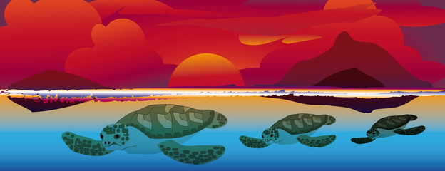 sunset swimming sea turtles  1