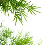 Fototapety bamboo leaves