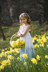 Young Girl Gathering Daffodils in Basket