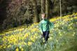 Young Boy Walking Through Field of Daffodils