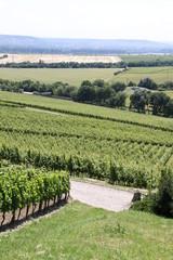 Schöne Weinberge im Rheingau
