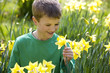 Young Boy Holding Daffodil in Spring Time