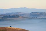 Schafherde, Morgennebel, Landschaft, Morgenlicht, Toskana