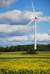 wind turbine in field of flowers