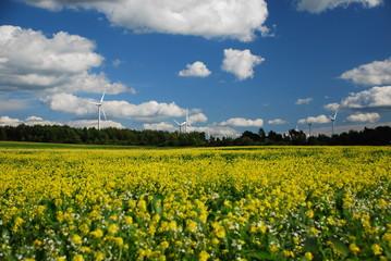 wind turbines in field of flowers