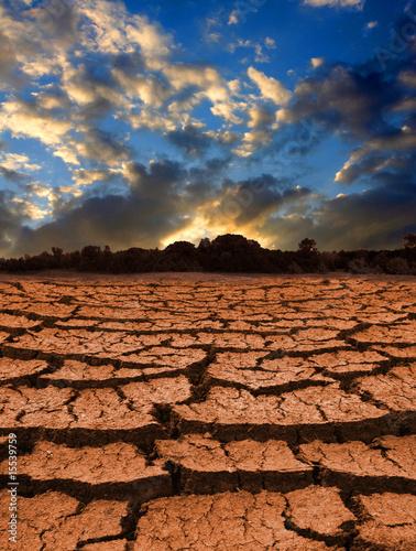 Leafless land