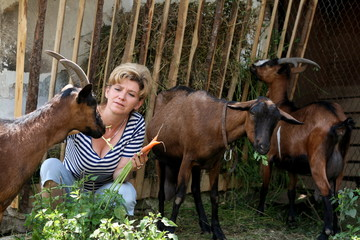woman is feeding the goats