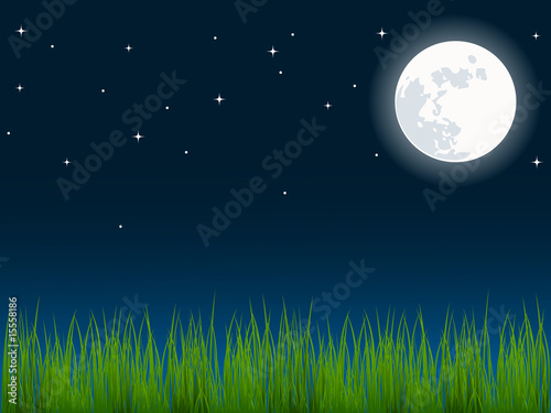 vector illustration of green grass over the night sky