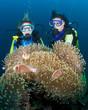 Zwei Taucher hinter einer großen Anemone, Indonesien