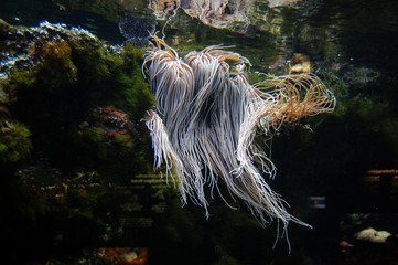 Underwater spaghetti