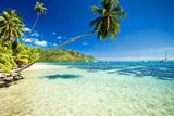 Fototapeta Palm tree hanging over stunning lagoon