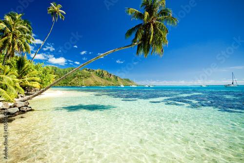 drzewko-palmowe-wisi-nad-oszalamiajaca-laguna