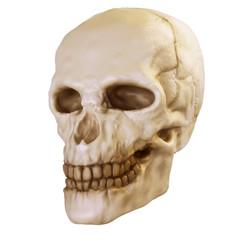 skull_pre
