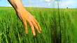 Environmental Field