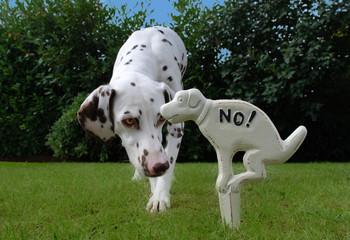 No Dog!