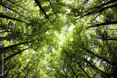 Leinwandbild Motiv Woods