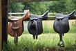 Saddles - 15640155