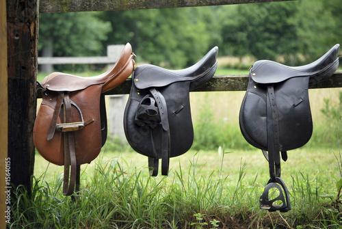 Leinwandbilder,satte,reiten,leckereien,pferd