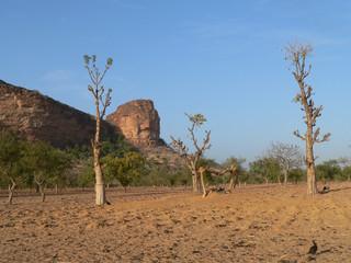 baobab au mali