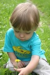 Blume flücken