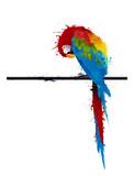Fototapety vector parrot parakeet, graffiti