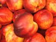 Nocipesche (Prunus persica)