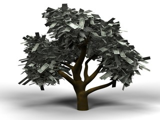 money tree dollar