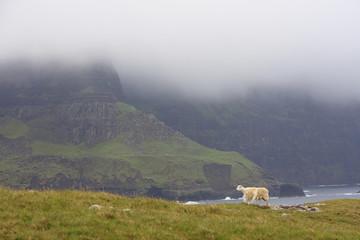 Waterstein Head im Nebel