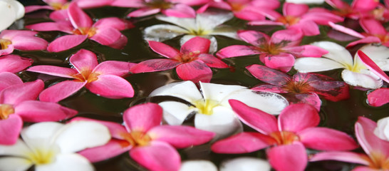 A beautiful macro of waterlilies