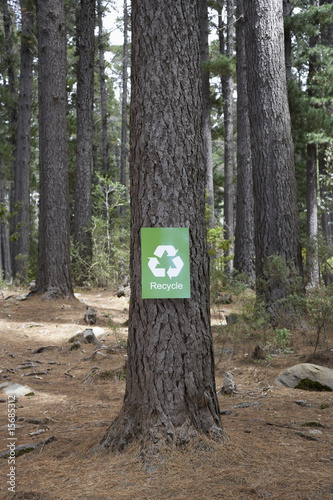 A recycle sign on a tree in the woods