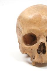 Skull isolated