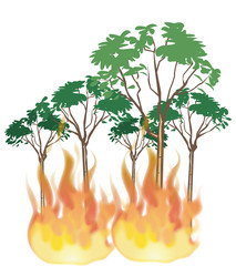 incendio alberi