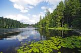 Fototapety Naturschutzgebiet Großer Arbersee