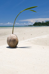 Coconut on a beach