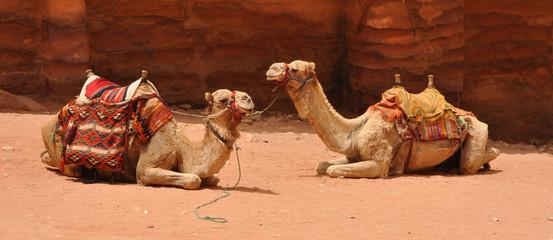 Kamele vor dem Schatzhaus